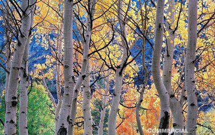 Michael Gordon - Farewell to a Season, Bishop Creek Canyon, Eastern Sierra Nevada (www.commercialfineart.com/fine-art-shopping-other-artists/michael-gordon-farewell.html)