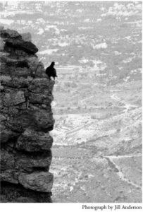 bird on cliff